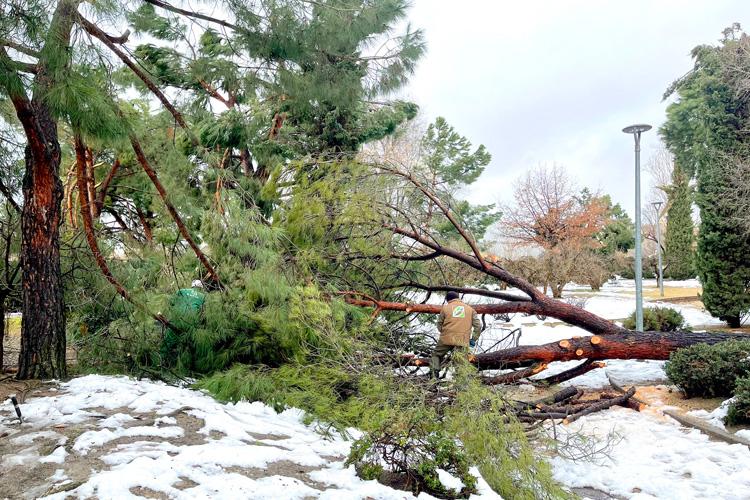 La nevada ocasiona en las infraestructuras de Alcobendas daños por valor de 5,4 millones de euros