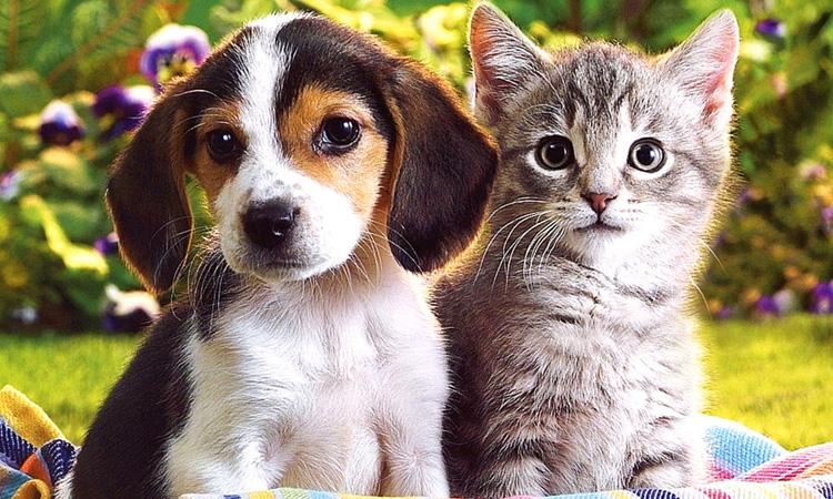 Feria de Adopción de mascotas en Alcobendas
