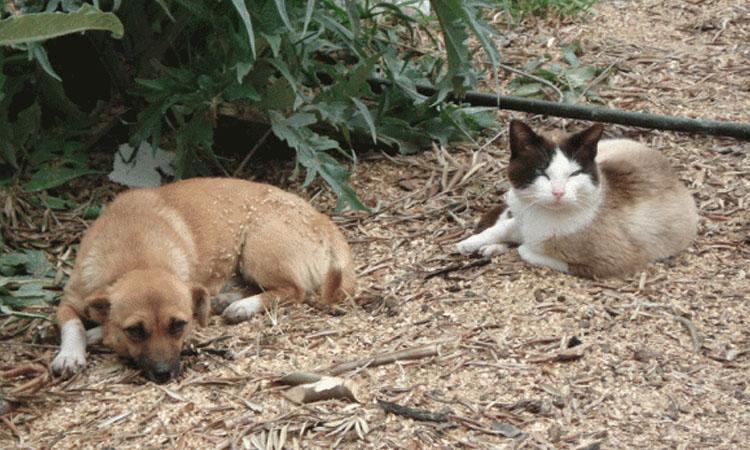 La empresa de recogida de animales de Alcobendas realiza mejoras en sus instalaciones