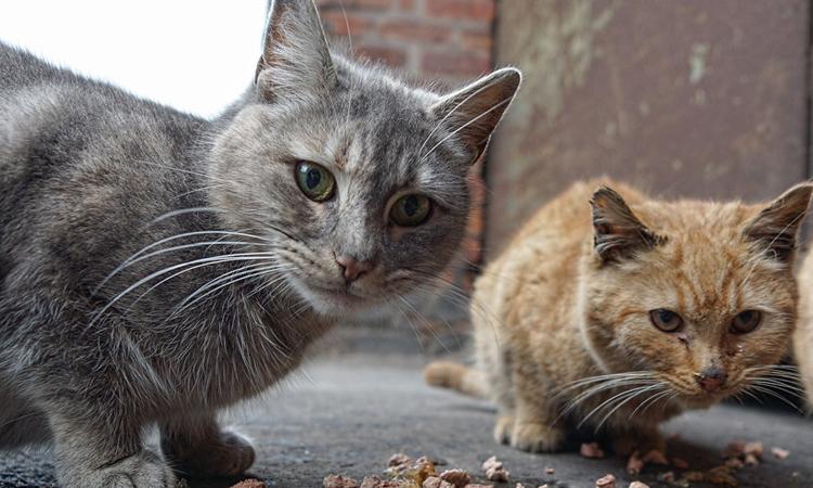 El Ayuntamiento de Sanse garantiza la alimentación de las colonias felinas controladas durante el Coronavirus